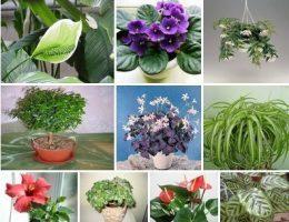 Миниатюра к статье 10 растений, которые принесут в ваш дом любовь