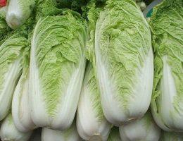 Миниатюра к статье Польза и вред пекинской капусты