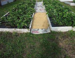 Миниатюра к статье Как сделать, чтобы в проходах трава не росла?