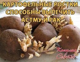 Миниатюра к статье Картофельные ростки лечат астму и рак