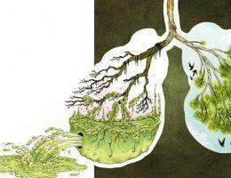Миниатюра к статье Очищаем организм от паразитов и уменьшаем отложения жира