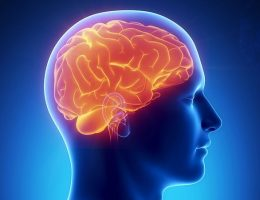 Миниатюра к статье Народные средства для улучшения мозгового кровообращения