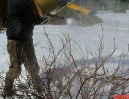 Миниатюра к статье Когда поливать кипятком кустарники