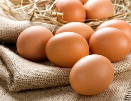 Миниатюра к статье Лучшее средство в борьбе с папилломами-яйцо